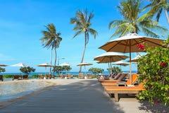 与热带手段的完善的海滩游泳池放松 库存照片