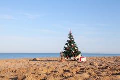 与热带手段礼物的圣诞树在海滩的 免版税库存照片