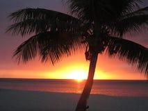 与热带日落的棕榈树 库存图片