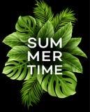 与热带棕榈叶的夏天海报 也corel凹道例证向量 向量例证