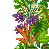 与热带植物和叶子的无缝的垂直的边界 背景被做,不用截去的面具 易使用为 库存图片