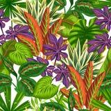 与热带植物和叶子的无缝的样式 背景被做,不用截去的面具 易使用为背景 免版税图库摄影