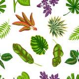 与热带植物和叶子的无缝的样式 背景被做,不用截去的面具 易使用为背景 免版税库存图片