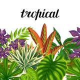 与热带植物和叶子的无缝的水平的边界 背景被做,不用截去的面具 易使用为 库存图片