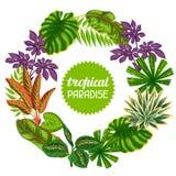 与热带植物和叶子的框架 给的小册子,横幅, flayers做广告图象 库存图片