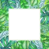 与热带植物和叶子的水彩框架 免版税库存图片