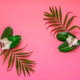 与热带植物和花的Flatlay在桃红色背景与 免版税库存照片