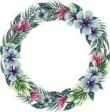 与热带植物的圆的花卉框架花圈 皇族释放例证