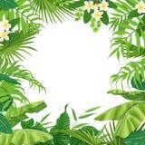 与热带植物的夏天背景 免版税库存图片