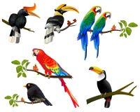 与热带植物的热带印刷例证所有鸟 皇族释放例证