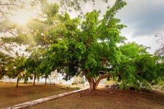 与热带植物的路 库存照片