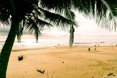与热带海滩的椰子树 免版税库存照片