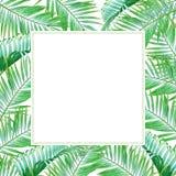 与热带绿色棕榈叶的水彩框架 图库摄影