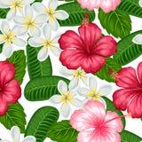 与热带花木槿和羽毛的无缝的样式 背景被做,不用截去的面具 易使用 库存照片