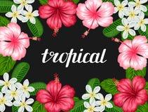 与热带花木槿和羽毛的背景 假日邀请的,贺卡,海报图象 免版税库存图片