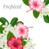 与热带花木槿和羽毛的背景 假日邀请的,贺卡,海报图象 库存照片