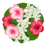 与热带花木槿和羽毛的背景 设计的图象在T恤杉,印刷品,邀请,招呼 免版税库存图片