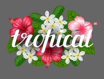与热带花木槿和羽毛的背景 设计的图象在T恤杉,印刷品,邀请,招呼 库存图片