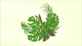 与热带花白色兰花、棕榈、爱树木的人和榕属的录影无缝的圈花束 影视素材