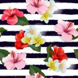 与热带花的无缝的样式 向量 库存例证