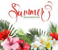 与热带花的暑假背景 夏天文本 向量 库存图片