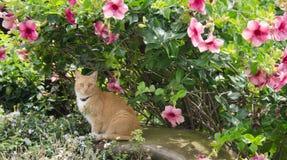 与热带花的猫 免版税库存照片