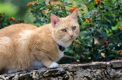 与热带花的猫 图库摄影
