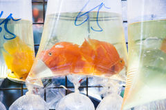 与热带鱼的袋子待售 免版税库存图片