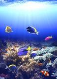 与热带鱼的水下的场面 库存照片