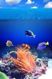 与热带鱼的水下的场面 免版税库存图片