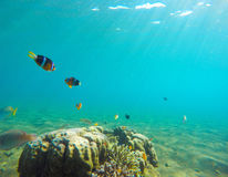 与热带鱼的水下的风景 Clownfish海里的照片 库存照片