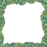 与热带Calathea Makoyana和Lancifolia植物叶子的长方形传染媒介边界 皇族释放例证