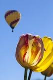 与热空气气球的黄色和红色郁金香 免版税图库摄影