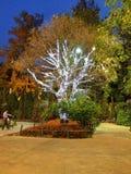 与照明设备的树 免版税库存照片