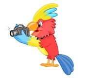 与照相机的五颜六色的美冠鹦鹉 免版税库存照片
