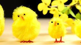 与照相机驱动的复活节鸡 影视素材