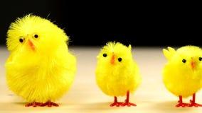 与照相机驱动的复活节鸡 股票视频