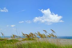 与熊草的海滩 库存照片