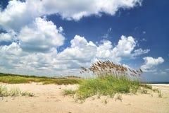 与熊草的海滩 库存图片