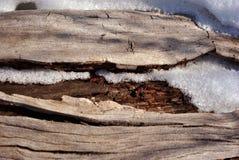 与熔化明亮的白雪,自然有机背景的老被风化的树干 免版税库存照片