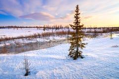 与熔化的雪和被解冻的补丁的春天风景在森林里 库存照片