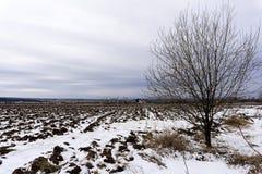 与熔化的雪的被犁的领域在早期的春天 图库摄影