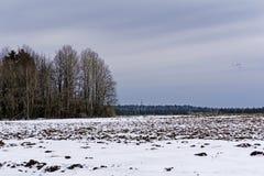 与熔化的雪的被犁的领域在早期的春天 库存图片