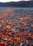 与熔岩岩石的冰岛黑海滩 免版税库存图片