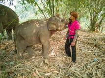 与熟悉的部落人民的婴孩大象 免版税图库摄影