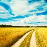 与燕麦领域和乡下公路的夏天风景 免版税库存照片