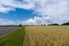 与燕麦领域和空的柏油路的夏天风景 图库摄影