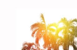 与爆炸日出光的可可椰子树 库存图片