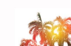 与爆炸日出光,梦想软的样式的可可椰子树 免版税库存照片