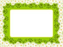 与爪子的白色绿色花卉春黄菊框架打印 向量例证